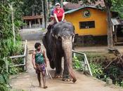 Paseando elefante Lanka