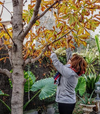 Arreglando el jardín de mis sueños...   Arranging the garden of my dreams