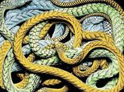 Pasión serpientes