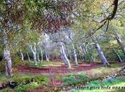 Parque Natural Moncayo, Tarazona, Zaragoza