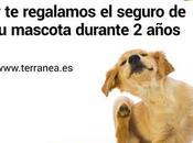 Campaña solidaria. Adopta perro regalan años seguro.