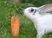 Pérdida pelo conejos