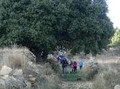 Bosque Parreta