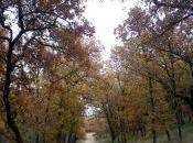 Camino Bonaval
