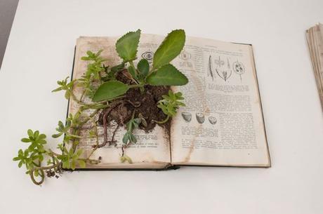 Alcances bot nicos paperblog for El jardin de sonoko