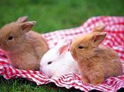 Cuidados Conejos Enanos. Todo Necesitas Saber!