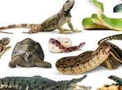 mejores reptiles domésticos puedes tener casa