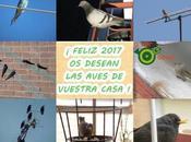 Feliz 2017 desean vecinas aladas urbanas