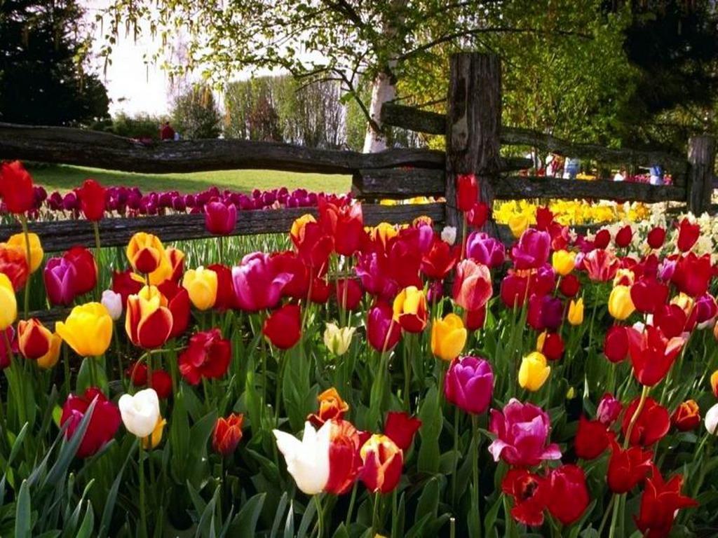 Terapia con Flores de Bach para la eyaculación precoz