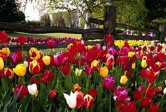 Terapia con Flores de Bach para la eyaculación precoz - Paperblog