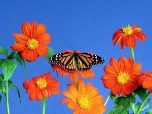Wallpaper paisaje flores y mariposa