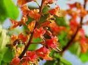 origen Flores Bach