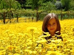 Terapia con Flores Bach para niños con dificultad de aprendizaje Terapia con Flores de Bach para niños con dificultad de aprendizaje