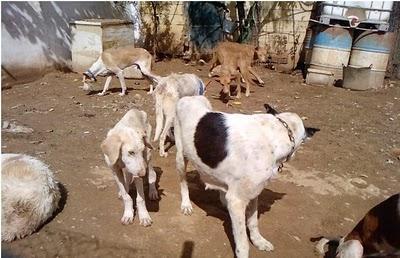 PANORAMA DESOLADOR: perros esqueléticos entre restos de cadáveres, necesitamos ayuda!!!