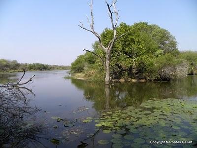 SUDAFRICA: VIDA SALVAJE EN EL PARQUE NACIONAL KRUGER