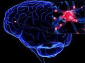 Cerebro humano Ordenadores