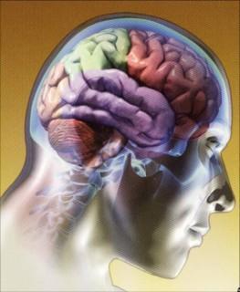 Algunas ideas acerca de nuestro maravilloso cerebro.