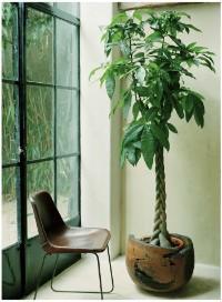 plantas interior oficina