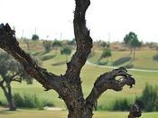 Canto árbol: Antonio Machado