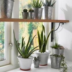 Plantas de interior paperblog for Plantas colgantes para interior