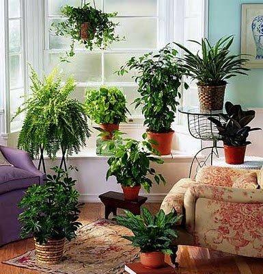 Plantas de interior paperblog for 101 plantas de interior