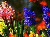 Consejitos para cuidado plantas