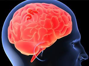El cerebro humano está encogiendo