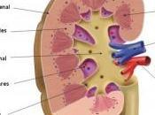 Novedades investigación tratamiento enfermedades cardiovasculares renales
