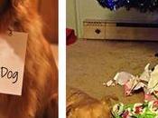 Perros arruinando Navidad