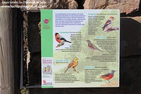 acebal garagueta soria aves pajaros ornitoturismo ornitologia cartel