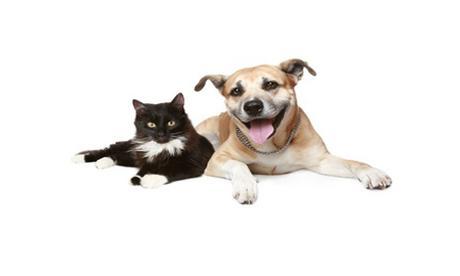 Cuidados esenciales para tu mascota luego de pasar por una esterilización