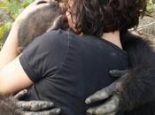 chimpancé solitario mundo abraza visitantes después años aislamiento isla