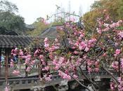 Consejos para viajar China