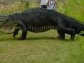 cocodrilo gigante deja pasmados fotógrafos