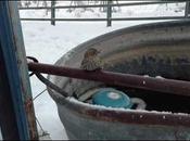 Hombre rescata pinzón congelado cerca metal