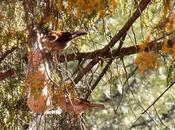 Días heladas profundas persistentes. olvidemos alimento agua para aves pequeños mamíferos jardín!!