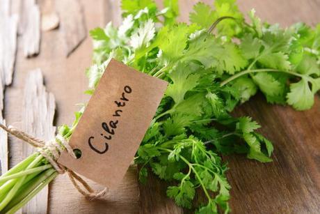 Un producto herbolario: Cilantro