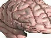 recomendamos leer estas interpretaciones soñar cerebro.
