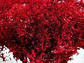 Este febrero también estará dedicado amor