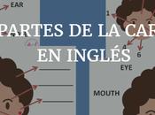 Partes cara inglés Fichas actividades imprimibles
