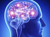 Como cerebro determina importante