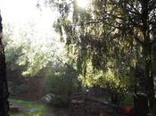 pleno invierno jardín. convierte encajes vegetación.