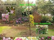último pedido line este invierno rosales raíz desnuda. Vivero 'Lens Roses'.