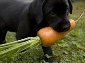 ¿Pueden nuestros perros comer frutas verduras?