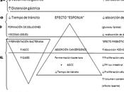 Mitos fibra enfermedad inflamatoria intestinal
