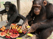 Zumos, nectares frutas