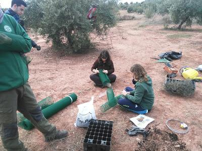 Voluntariado, Reforestación Participativa