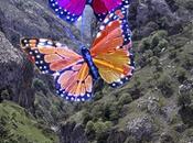 Mariposas Luz, poema simple.
