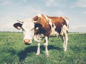 Reformateando ideas: Vaca con… (Sobre leche)