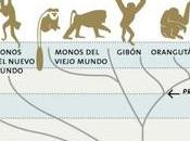 Evolución, hominización humanización